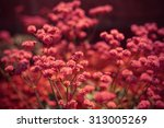 beautiful flowers with the... | Shutterstock . vector #313005269