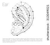 ear carcass polygonal geometric ... | Shutterstock .eps vector #313049021