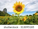 Sunflower On Summer And...