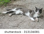 Stock photo a white and grey cat relaxes outdoors 313136081