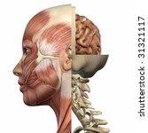 female anatomy body   Shutterstock . vector #31321117