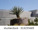 Photograph Of A Maguey Plant...