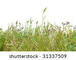 green grass isolated on the...   Shutterstock . vector #31337509