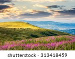 landscape with high wild grass and purple flowers on the hill in  high mountain in morning light - stock photo