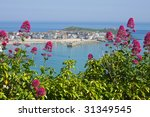 St. Ives wild red Valerian (Centranthus ruber), Cornwall UK. - stock photo