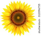 sunflower isolated  vector... | Shutterstock .eps vector #313596755
