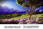 lavender fields | Shutterstock . vector #313685909