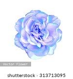 Beautiful Light Blue Rose...