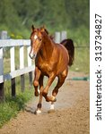 red horse runs gallop on the... | Shutterstock . vector #313734827