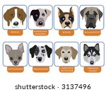 illustration of purebred dogs ... | Shutterstock .eps vector #3137496
