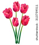 Pink And Red Vector Tulips ....