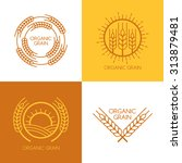 set of vector linear wheat ... | Shutterstock .eps vector #313879481