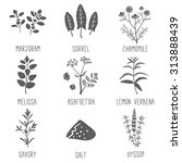 Fresh Herbs And Spices Icon Se...