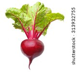beetroot with leaves  fresh... | Shutterstock . vector #313932755