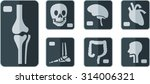set of x rays flat icon   Shutterstock .eps vector #314006321