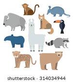 vector set wild animals. lama ... | Shutterstock .eps vector #314034944