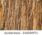 Small photo of Close Up of Redwood Bark