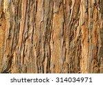Close Up Of Redwood Bark