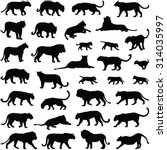 Big Cats Collection   Vector...