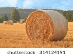 Wheat Field After Harvest With...