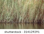 Tall Grasses Near The Lake Of...