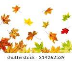 Maple Autumn Falling Leaves ...