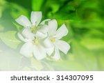 Petal Of Orange Jasmine Flower...