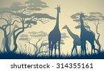 Stock vector horizontal vector illustration of wild giraffes in african savanna with trees 314355161