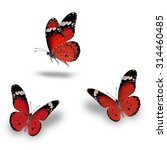 beautiful red butterfly flying... | Shutterstock . vector #314460485