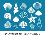 set of various white sea shells ... | Shutterstock .eps vector #314493077