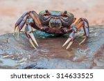 Fresh Water Crabs Thailand
