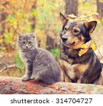 Stock photo dog and cat outdoors in autumn forest 314704727
