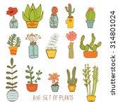 beautiful set of hand drawn... | Shutterstock .eps vector #314801024