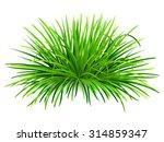 bunch of green grass. vector ... | Shutterstock .eps vector #314859347