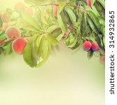 sweet peach fruits growing on a ... | Shutterstock . vector #314932865