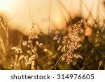 grass and flower field under... | Shutterstock . vector #314976605