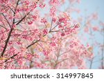 sakura flower or cherry blossom ... | Shutterstock . vector #314997845