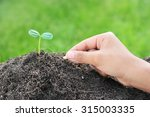 farmer's hand planting a seed... | Shutterstock . vector #315003335