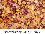 Colorful Autumn Leaves. Natura...