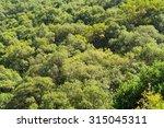 forest hills | Shutterstock . vector #315045311