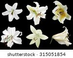 illustration with white lily... | Shutterstock .eps vector #315051854