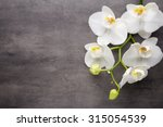 White Orchid Grey Background - Fine Art prints