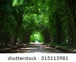 Tunnel Bamboo Trees