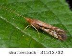 macro shot of a caddisfly | Shutterstock . vector #31513732