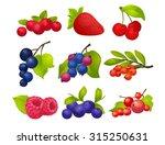 berries  set  big set  with no... | Shutterstock .eps vector #315250631