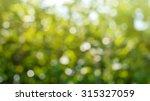 de focused of natural green... | Shutterstock . vector #315327059