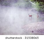 Two Young Whitetail Deer Bucks...