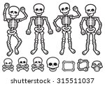 Vector Skeletons And Skulls