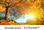 golden autumn scenery with a... | Shutterstock . vector #315523697