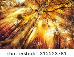 enchanting forest scenery in... | Shutterstock . vector #315523781